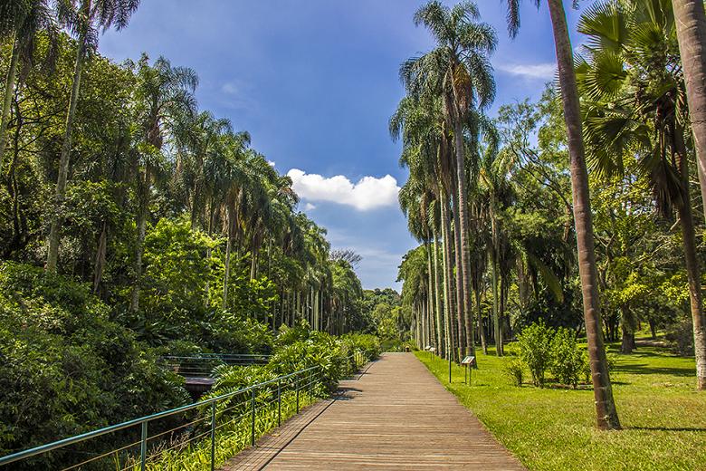 imagens do Jardim Botânico de São Paulo