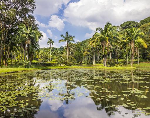 Jardim Botânico de São Paulo - dicas