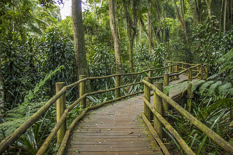 o que fazer no Jardim Botânico de São Paulo