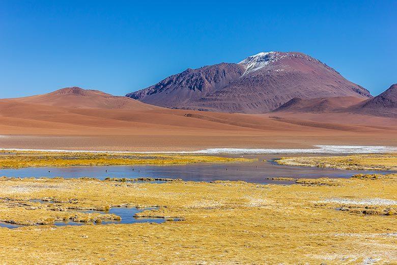 Bofedal de Quepiaco no Atacama - Chile