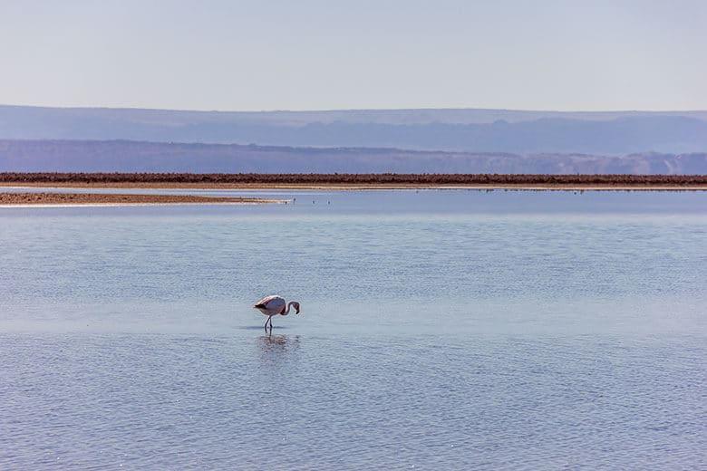 lagoa dos flamingos no Atacama - dicas