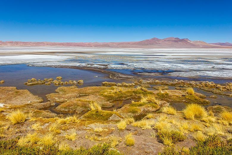 Salar de Quisquiro Deserto do Atacama