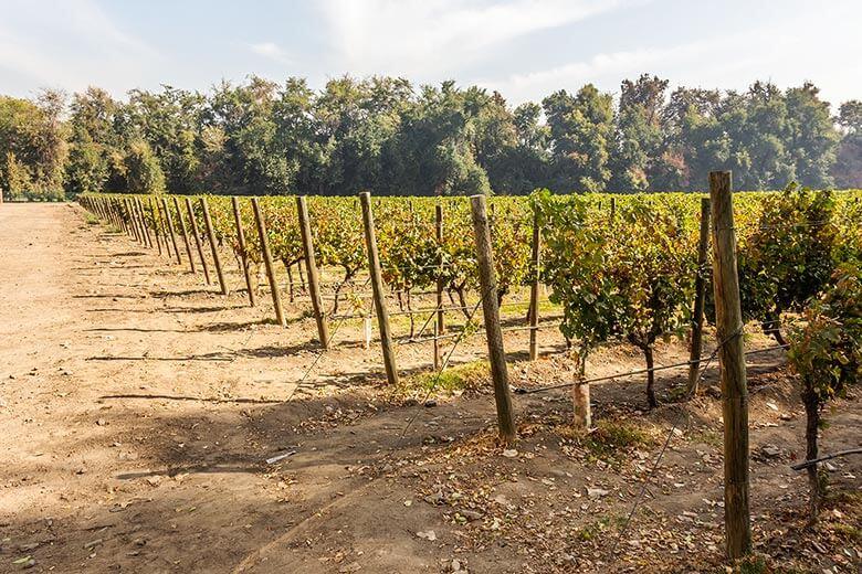 melhores vinícolas em Santiago