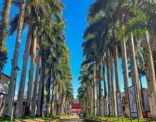 o que fazer em Joinville - Santa Catarina